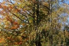 Begunje-Bled 062